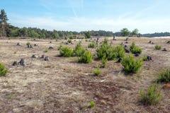 Sable de dérive dans le zand de Mosselse de réserve naturelle image libre de droits