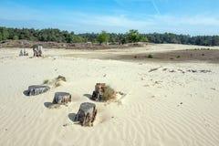 Sable de dérive dans le zand de Mosselse de réserve naturelle photographie stock libre de droits
