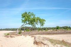 Sable de dérive dans le zand de Mosselse de réserve naturelle image stock
