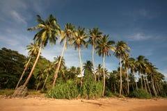 sable de paumes d'océan Images libres de droits