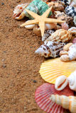 Sable de Seashells Photos libres de droits