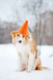 Dog wearing a hat cone Stock Images