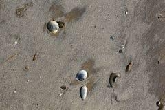 Sable et coquilles de plage du Texas Image stock