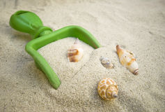 Sable et Seashells photo stock
