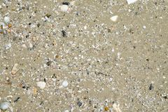Sable humide avec la coquille au fond de texture de littoral de plage Été Image stock