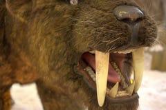 Sable - tigre dentado fotos de archivo libres de regalías