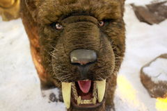 Sable - tigre dentado imagen de archivo libre de regalías