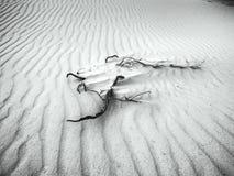 Sables blancs - désert dans noir et blanc Photo libre de droits