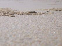 Sables habités par crabe Images libres de droits