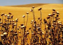 Saborear el desierto Imágenes de archivo libres de regalías