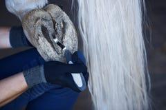 Sabot de cheval de nettoyage d'homme Photo stock