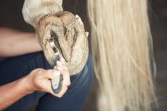 Sabot de cheval de nettoyage d'homme Image stock