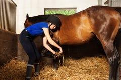 Sabot du ` s de cheval de nettoyage de jeune femme à la stalle de boîte Photos stock
