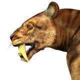 Sabre-dente Cat Head ilustração do vetor