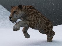 Sabre-toothed tiger in ice age blizzard. Ice age sabre toothed tiger prowling through snow storm on frozen tundra Royalty Free Stock Photos