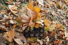 Sac avec des feuilles d'automne Images libres de droits