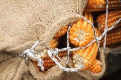 Sac de grains Photos stock