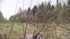 Sac de Trush se situant dans la forêt banque de vidéos