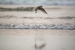 Sacado de la playa Fotografía de archivo libre de regalías