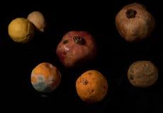 Sacador de frutas malsanas mohosas Fotos de archivo