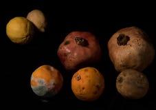 Sacador de frutas malsanas mohosas Fotos de archivo libres de regalías