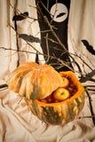 Sacador de la calabaza de Halloween Imagen de archivo libre de regalías