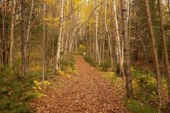 Sacandaga drogi przemian lasowy ślad w wczesnego poranku świetle zdjęcia stock