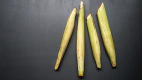 Saccharum edule, also known as terubuk, duruka, Fiji asparagus, dule, pitpit, & naviso. Cultivated in tropical climates. Saccharum edule also known terubuk stock image