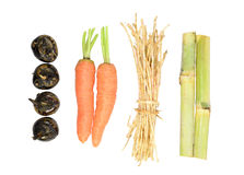 Saccharum sinense,carrot,Water-chestnuts,cogongrass rhizome. Some Saccharum sinense,carrot,Water-chestnuts and cogongrass rhizome stock photos