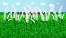 Saccharum spontaneum dell'erba di Autumn Kans con il fondo del cielo Fotografie Stock Libere da Diritti