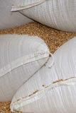 Sacchetti di granulo Fotografie Stock