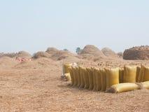 Sacchetti di riso durante la raccolta immagini stock libere da diritti
