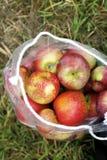Sacchetto delle mele Immagine Stock Libera da Diritti