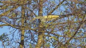 Sacchetto di plastica nell'albero di ontano stock footage