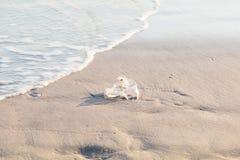 Sacchetto di plastica sulla spiaggia Immagine Stock Libera da Diritti