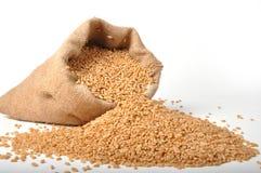 Sacchi dei granuli del frumento Fotografie Stock