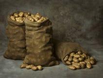 Sacchi della tela da imballaggio delle patate Fotografia Stock Libera da Diritti