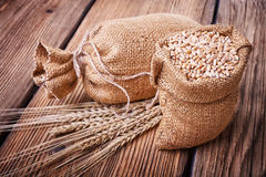 Sacchi delle orecchie del grano e del grano Fotografia Stock