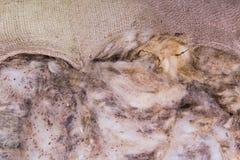 Sacco con lana greggia Fotografia Stock