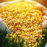Sacco del seme del cereale Fotografia Stock