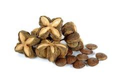 Sacha inchi peanut seed on white background Royalty Free Stock Photo