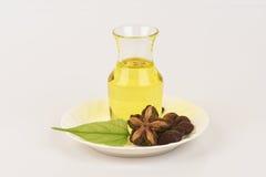 Sacha inchi, Sacha inchi, Sacha mani, Inca peanut oil from seeds and Sacha. Royalty Free Stock Photos