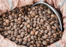 Sacha inchi seed. In local market at Laos of Asia stock images