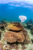 Sachet en plastique vidé flottant à côté d'un récif coralien Photo stock