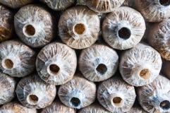 Sachets en plastique d'Emty pour le champignon de yanagi Images libres de droits