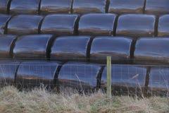 Sachets en plastique noirs des balles de culture de foin roulées et enveloppées par l'agriculteur sur la ferme pour la moisson photographie stock
