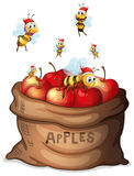 A sack of apple with bees Royalty Free Stock Photography