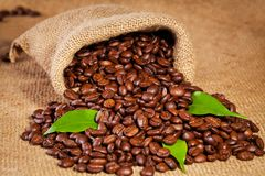 Sack bag full of roasted coffee beans Stock Images