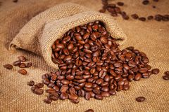 Sack bag full of roasted coffee beans Royalty Free Stock Image