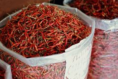 Sack of chilli Royalty Free Stock Image
